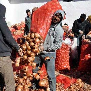 Soğan üreticisi isyanda !