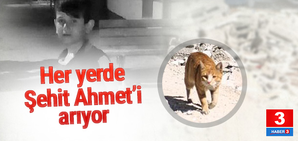 Şehit Ahmet'in kedisi