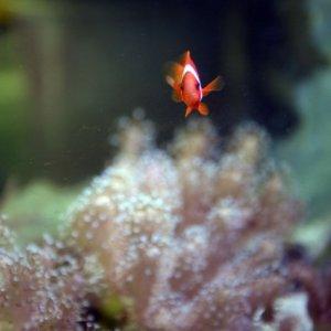 Kayıp balık Nemo çölde !