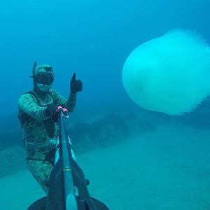 Dev denizanalarının göçü kamerada
