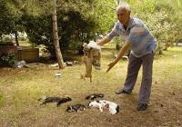 Ataköy'de kedi vahşeti !