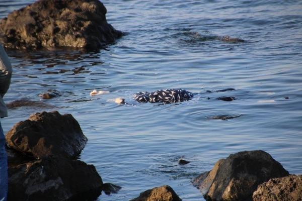 Denizdeki kadın cesedi yürekleri ağza getirdi !