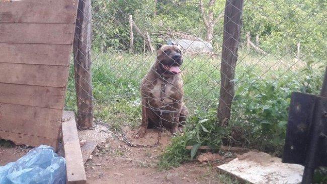 Erkek köpeği zehirleyip eşi ve yavrularını çaldılar