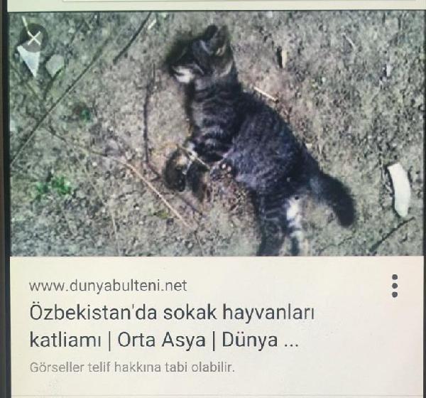 'Kedi' ile şaka başına iş açıyordu !