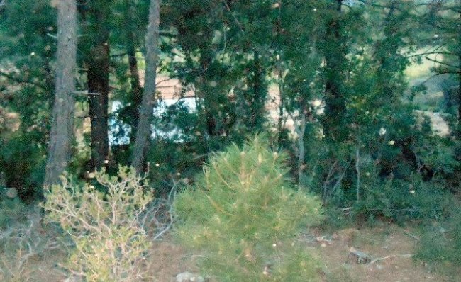 Tecavüzcü 5 yıl ormanda yaşadı !