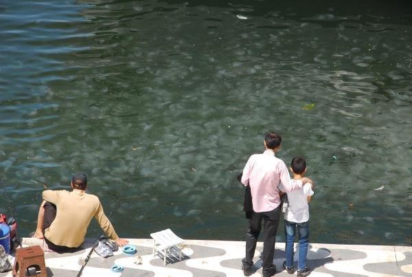 İzmir Körfezi'nde denizanası istilası