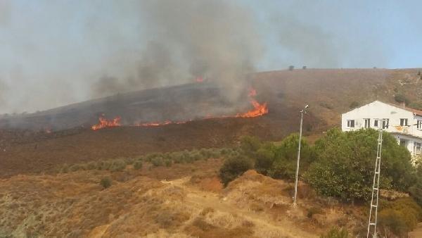 Paşalimanı Adası'nda korkutan yangın