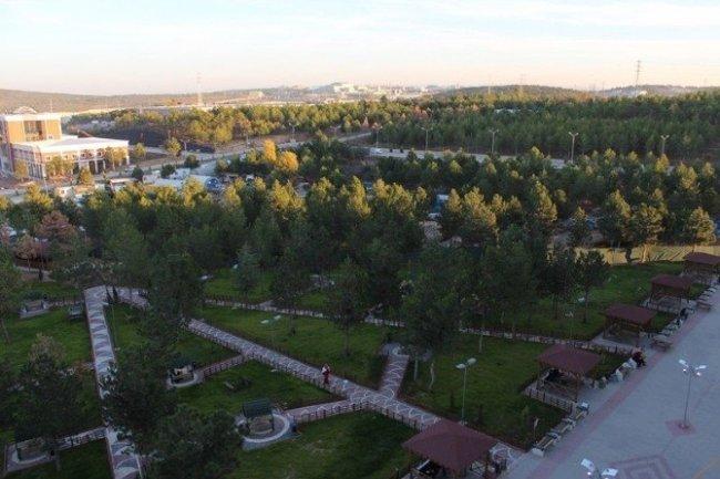 Üniversitede ağaçlar gitti oturma alanı geldi