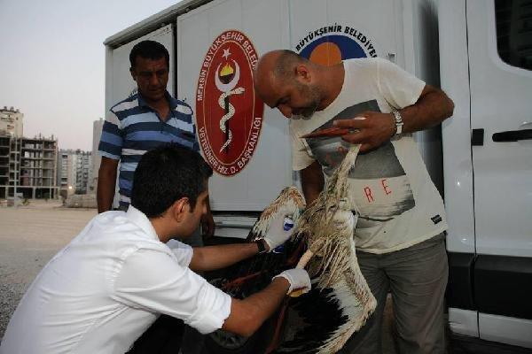 Binlerce kilometre uçtu Türkiye'de vuruldu