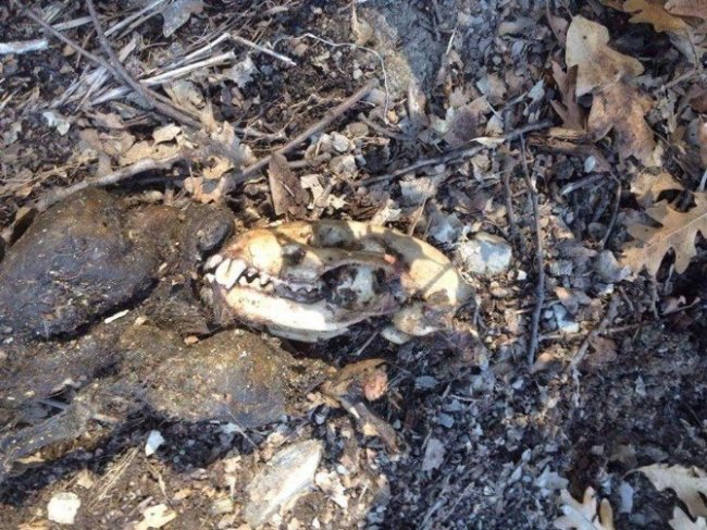 Ormanlık alanda leşi bulunmuştı !