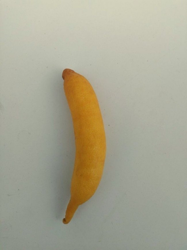 Bu da muz görünümlü limon